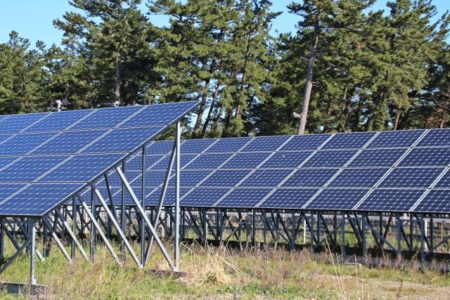 針葉樹と太陽光発電